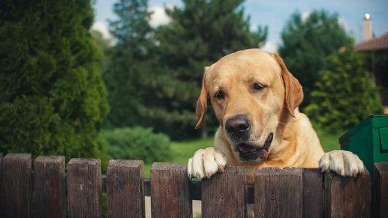 3 Things To Think About When Getting a Fence For Your Big Dog